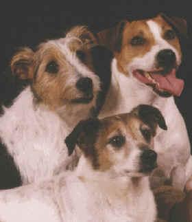 Zak George S Dog Training Revolution Australia